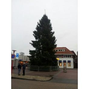 Grote kerstboom Abies