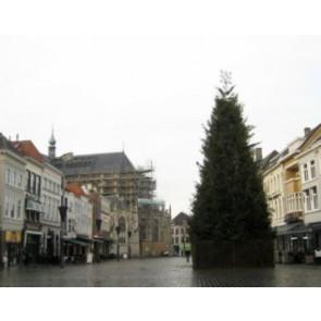 Grote kerstboom Nordman